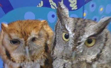 owlsweb